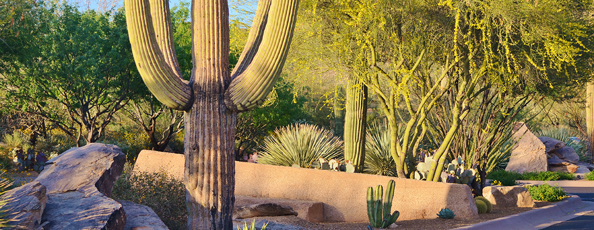 landscaping cactus image